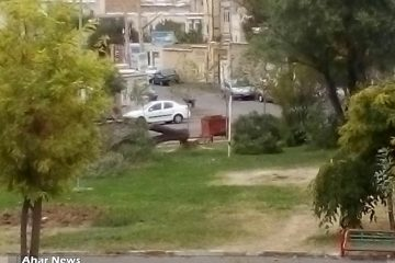 قلع و قمع درختان ۲۵ ساله در اهر