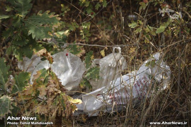 گزارش تصویری از وضعیت اسف بار جنگل فندقلوی اهر