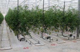 بزرگترین مجتمع گلخانه ای کشور در منطقه آزاد ارس افتتاح شد