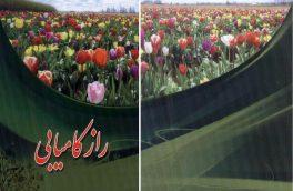 «راز کامیابی» جدید ترین اثر سید علینقی آل محمد منتشر شد