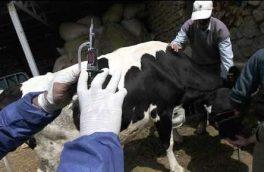 آغاز طرح واکسیناسیون رایگان دام در شهرستان هریس