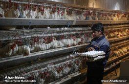 مرغداری تخمگذار با ظرفیت ۳۰ هزار قطعه در روستای کردلقان افتتاح شد