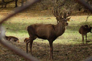 ارزیابان یونسکو از منطقه حفاظت شده آینالو بازدید کردند