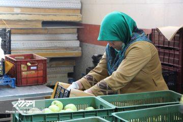 نبود صنایع تبدیلی کمر تولیدات کشاورزان اهر و هریس را می شکند