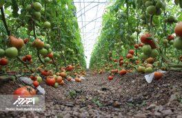 بازدید فرماندار اهر از مراکز تولید محصولات کشاورزی گلخانه ای در این شهرستان