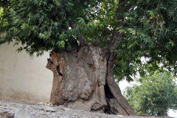 ثبت ۵ اثر طبیعی منطقه ارسباران (قره داغ) در فهرست آثار ملی