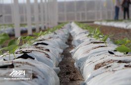 گلخانه هیدروپونیک برای اولین بار در اهر افتتاح شد