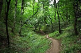 پرونده جنگل های ارسباران روی میز یونسکو /  پرونده میراث طبیعی ارسباران از سویIUCNرد شده است