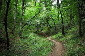 ثبت جهانی جنگل های ارسباران و ژئو پارک ارس در دستور کار است