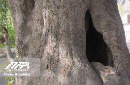 مراتب ثبت ۲ میراث طبیعی در خداآفرین به استاندار آذربایجان شرقی ابلاغ شد