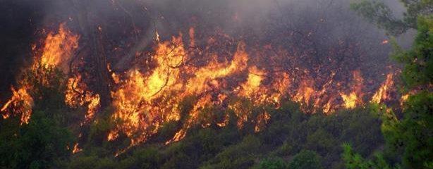 ۲۶۰ هکتار از جنگل ها و مراتع جنگل های ارسباران در آتش سوخت / هشدار نسبت به بروز مجدد آتش سوزی در جنگل های ارسباران