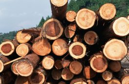 دستگیری ۴ قاچاقچی الوار جنگلی در مشگین شهر