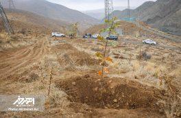 اجرای طرح توسعه جنگل کاری ارسباران به مساحت ۳۰ هکتار در اهر