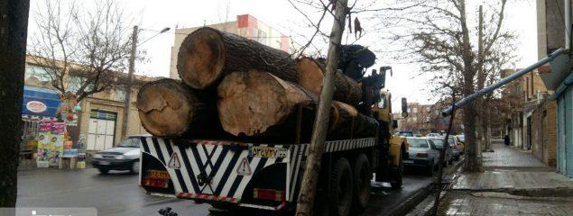 تبر تیز سودجویان بر تن درختان منطقه ارسباران