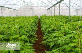 گلخانه ۳ هکتاری پشمی با صرف اعتبار ۶۵۰ میلیون تومان در اهر افتتاح شد
