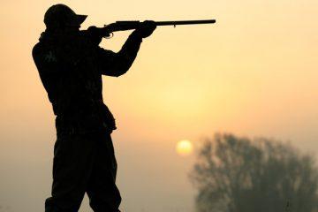 شکار پرندگان در آذربایجان شرقی ممنوع شد