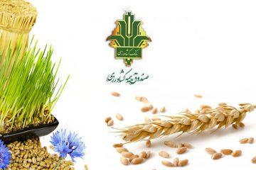 طرح بیمه پایه محصولات کشاورزی در آذربایجان شرقی اجرا شد / خسارت ۱۰۰ درصدی به محصولات کشاورزی شهرستان های اهر، ورزقان و هریس در سال گذشته