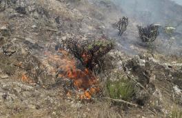 سهل انگاری گردشگران ۵۰ هکتار از مراتع و جنگل های منطقه دیزمار را نابود کرد