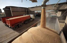 ۳۲ هزار تن گندم از کشاورزان آذربایجان شرقی خریداری شد / خروج گندم از استان ممنوع است / کاهش ۱۵ درصدی تولید گندم در شهرستان اهر