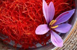 کشت پیازچه زعفران در اراضی شهرستان اهر