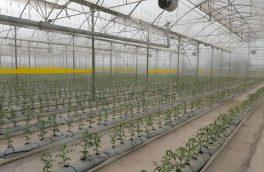 رشد چهار برابری صنعت گلخانهای آذربایجانشرقی