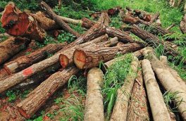 قطع درخت در منطقه حفاظت شده ارسباران اتفاق نیفتاده است
