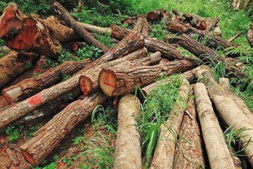 حمل بار درخت فاقد مجوز در ورزقان ممنوع است