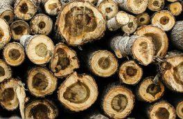 کشف ۵۰ تن چوب درخت قاچاق در اهر و هوراند