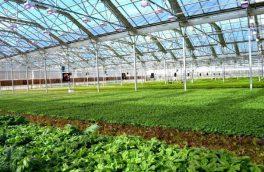 سالانه ۵۰ هزار تن محصولات گلخانه ای در آذربایجان شرقی تولید می شود