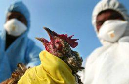 نتایج آزمایش آنفلوآنزای پرندگان در آذربایجان شرقی منفی است