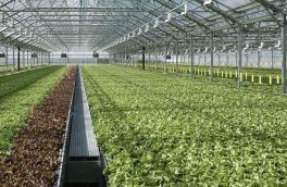 افزایش بیش از هشت برابری سطح گلخانه های شهرستان اهر