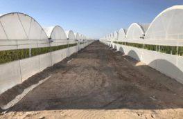 ۱۰ شهرک کشاورزی در آذربایجان شرقی ساخته می شود