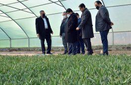 آذربایجان شرقی در توسعه گلخانه ها رتبه نخست کشوری را داراست