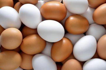 تثبیت قیمت تخم مرغ در آذربایجان شرقی از هفته آینده