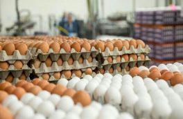 تنظیم بازار تخم مرغ در آذربایجان شرقی بر مبنای قیمت مصوب کشوری است