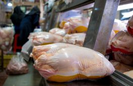 مرغ زنده و کشتار شده از آذربایجان شرقی خارج نمی شود
