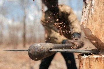 کشف و توقیف ۱۲۰ اصله درخت جنگلی قطع شده در شهرستان کلیبر