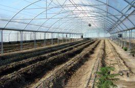 شهرک گلخانه ای شهرستان اهر به مساحت ۲۴ هکتار آماده واگذاری است