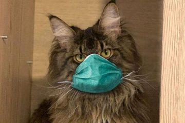 انتقال کرونا از انسان به گربه تایید شد