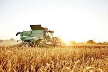 امسال ۱۳ هزار تن گندم در خداآفرین تولید میشود