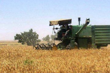 امسال ۴۷۵ هزار تن گندم آذربایجان شرقی برداشت میشود