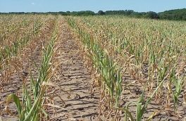 سنگینی خسارت ۲۷۰۰ میلیارد تومانی خشکسالی بر دوش کشاورزان آذربایجان شرقی