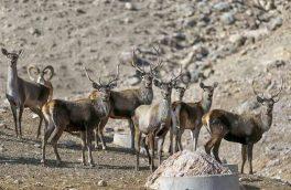 بهرهمندی از شیوه های هوشمند برای حفاظت گونه ها و زیستگاه های آذربایجان شرقی
