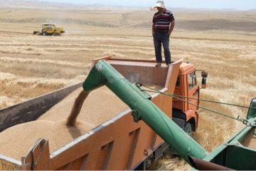 خرید تضمینی بیش از ۸۴ هزار تن گندم در آذربایجان شرقی