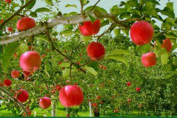 پروانه گردشگری کشاورزی در ۴ شهر آذربایجان شرقی صادر شد