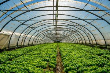 آذربایجان شرقی از نظر توسعه واحدهای گلخانه ای در کشور رتبه برتر را دارد