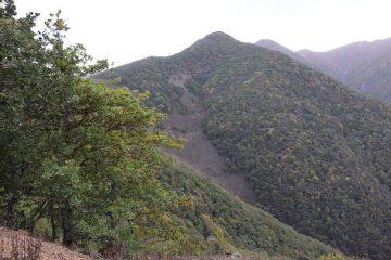 کارشناسان حفاظت طبیعی جنگل های دیزمار ورزقان را ارزیابی میکنند